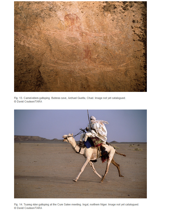 Camels article: rock art featuring camels with a current photo of  a camel's use in Niger.