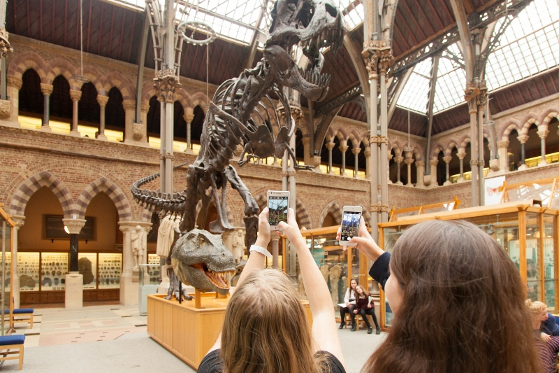 Figure 2: Visitors in the Museum of Natural History